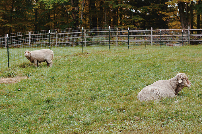 the outlier inn sheep farm - glamping airbnb catskills upstate ny