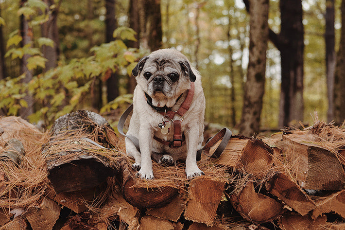 the outlier inn pug dogs welcome - glamping airbnb catskills upstate ny