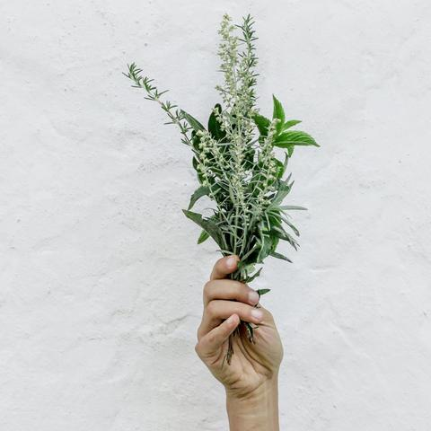 Rosemary Mint Scent with Peppermint Spearmint