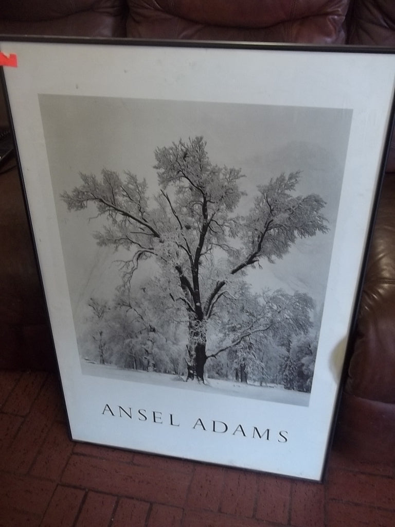 Picture Ansel Adams tree 10326