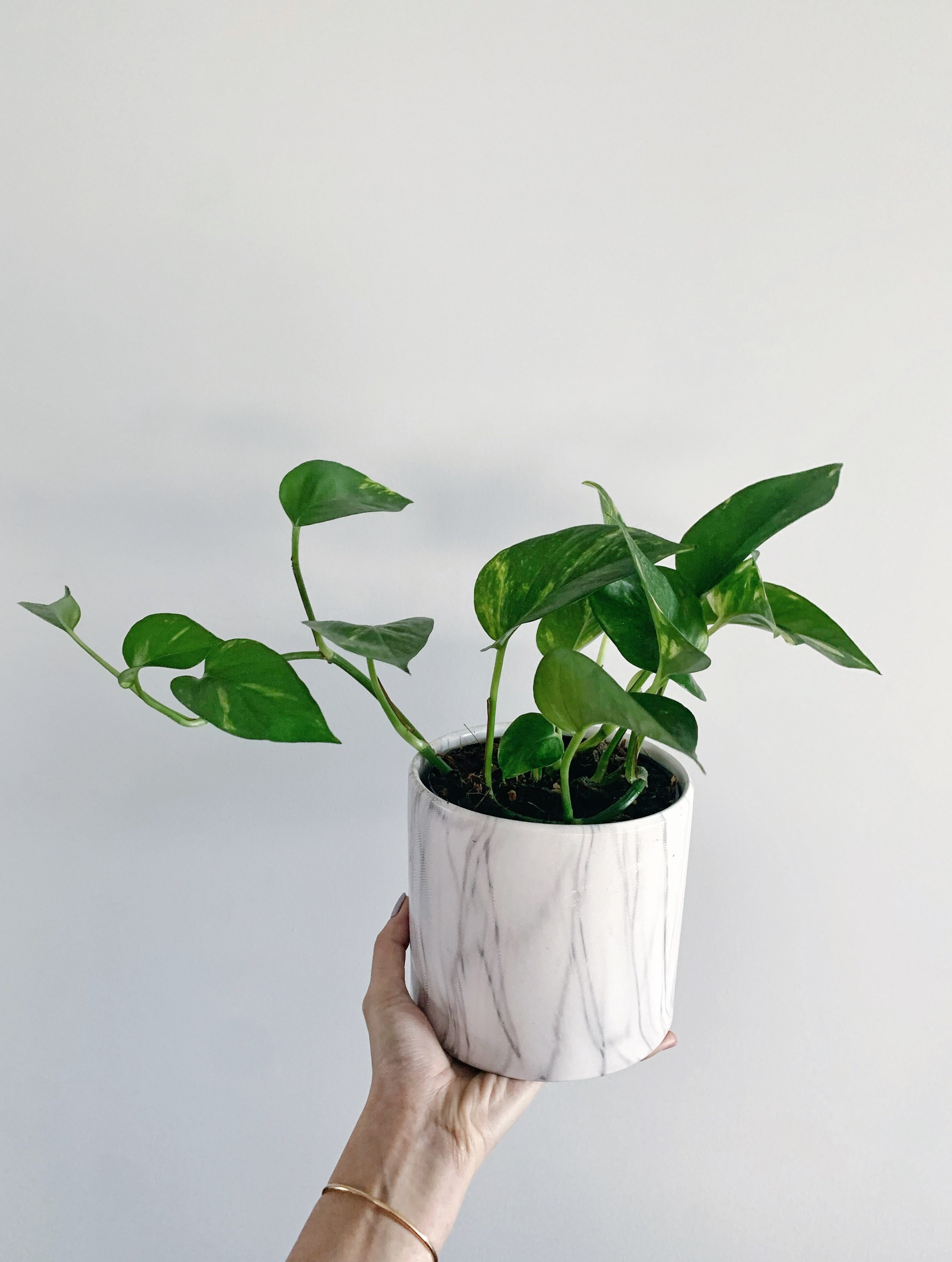 Weekly Indoor Plants