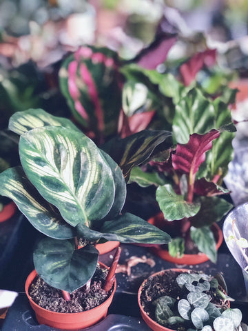 The Health Benefits Of Plants   Neat Nutrition. Clean, Simple, No-Nonsense.