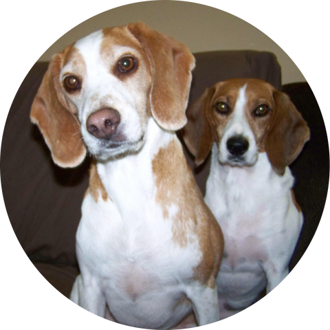 Lucky and Lady Glandex Pet of the Month December 2018