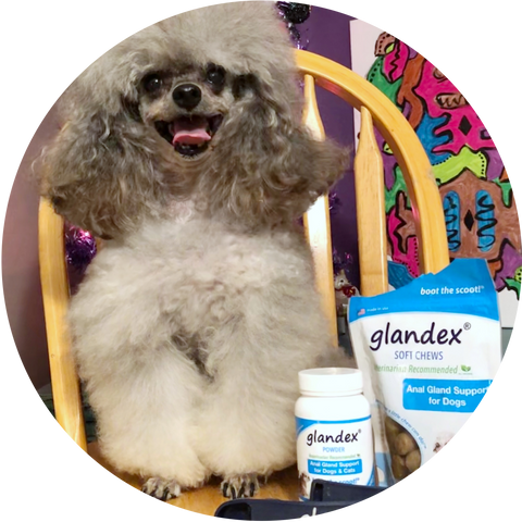 Glandex Pet of the Month - Lucy April 2019