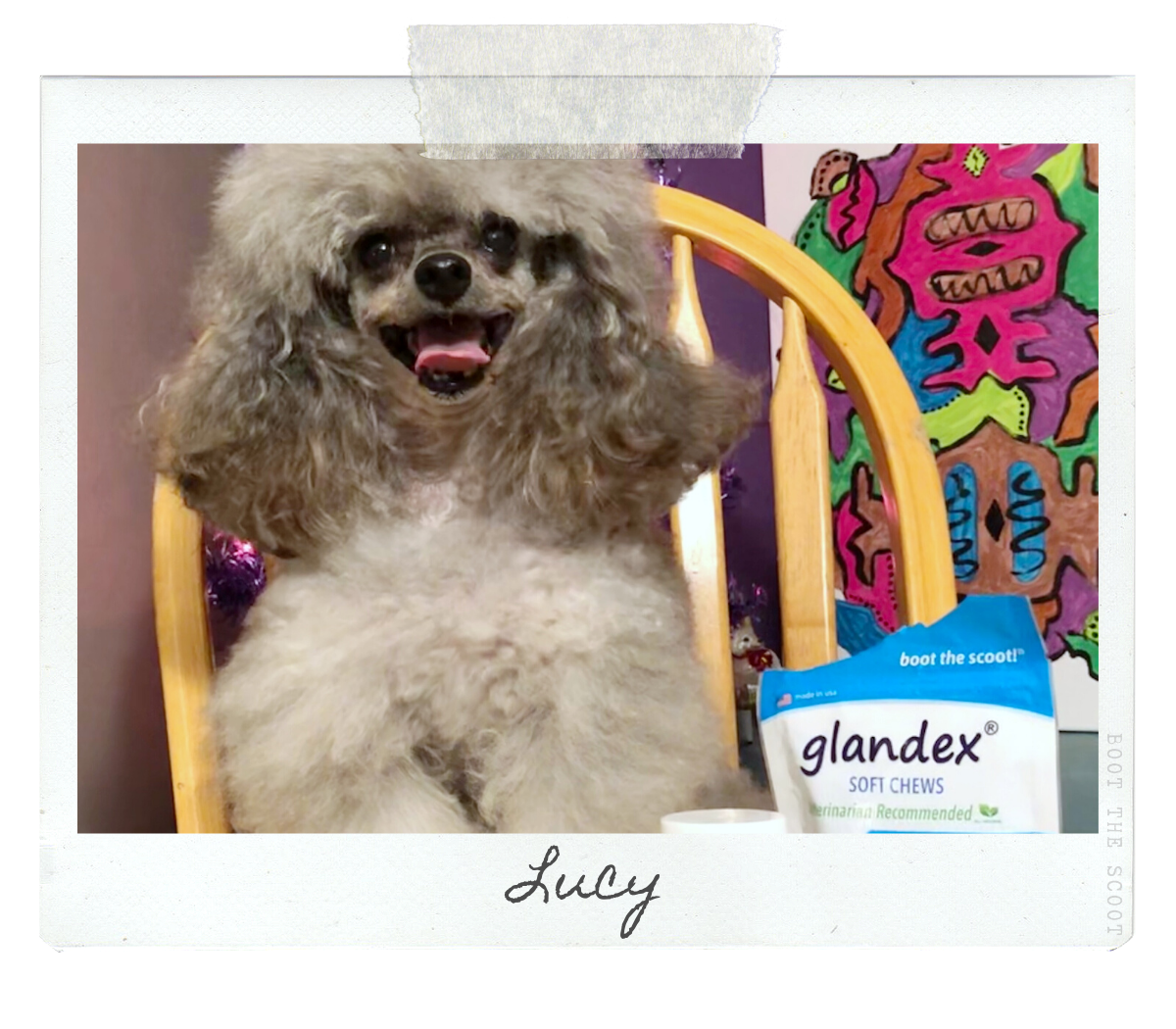 Glandex Pet Dog of the Month