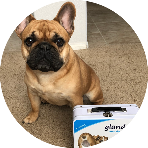 Glandex May 2019 Pet of the Month - Winston