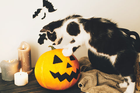 Pets and Halloween Decorations