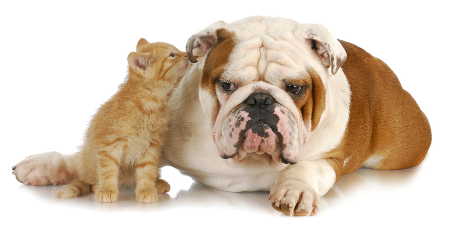 Cute Dog and Kitten - Glandex Anal Gland Supplements