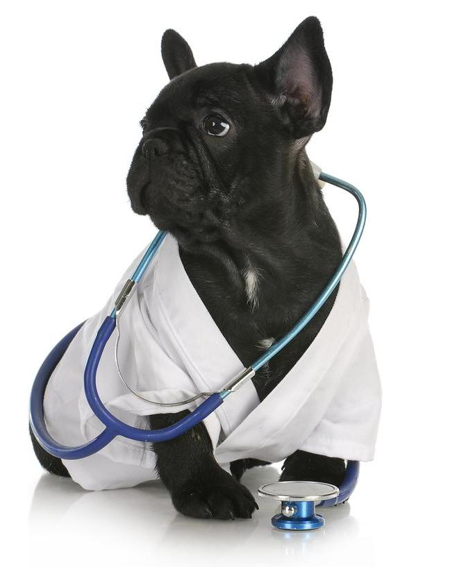 Cute Puppy Stethoscope - Glandex Veterinary Anal Gland Supplements for Dogs and Cats