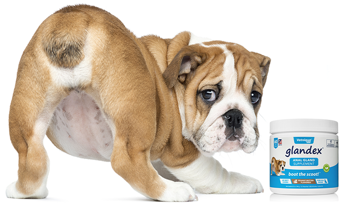 Glandex Anal Gland Supplement for Dogs - MWI Animal Health