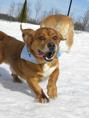 Ollie Glandex Pet of the Month May 2015
