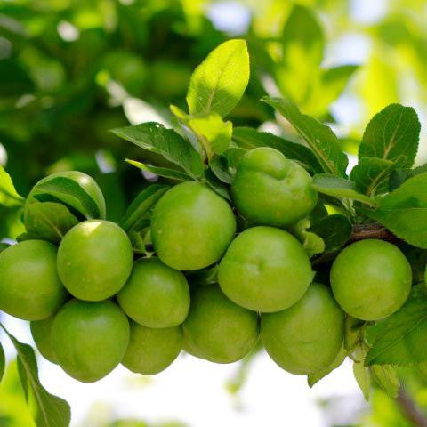 kakadu_plum_extract