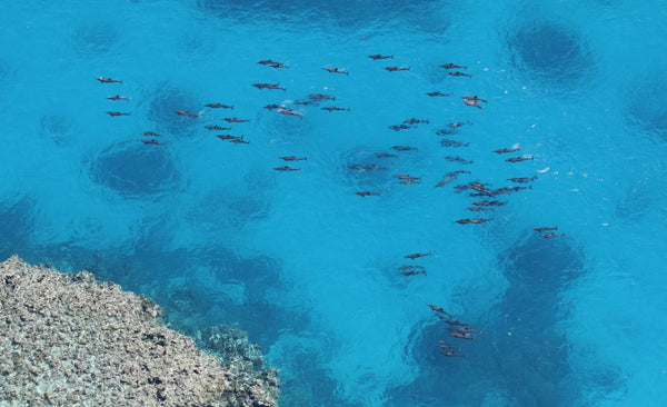 Dolphins on the Great Barrier Reef | Wildlife Conservation Co.