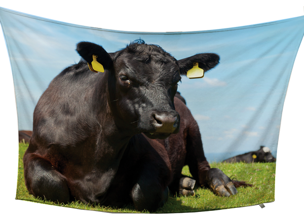 Black Angus Fleece Blanket