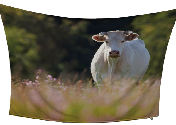 Charolais Fleece Blanket