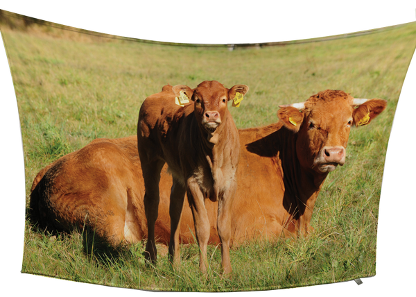 Limousin Fleece Blanket