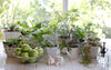 Indoor Gardening: What You Need to Know to Begin