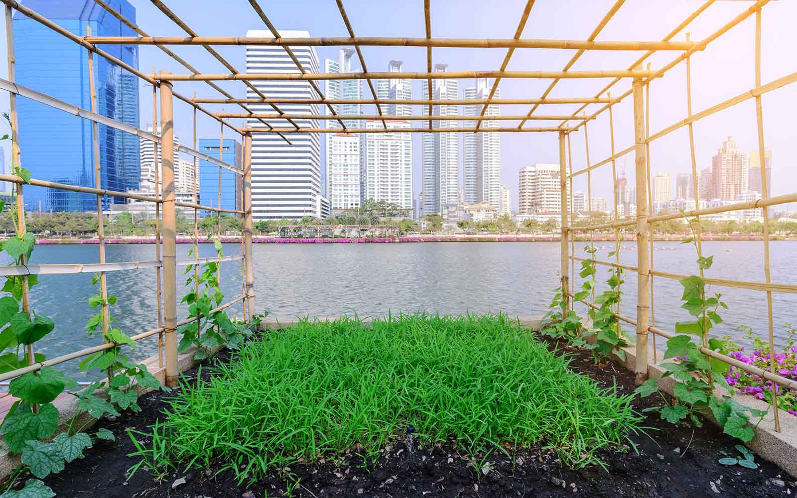 Impressive Urban Farms Around the World