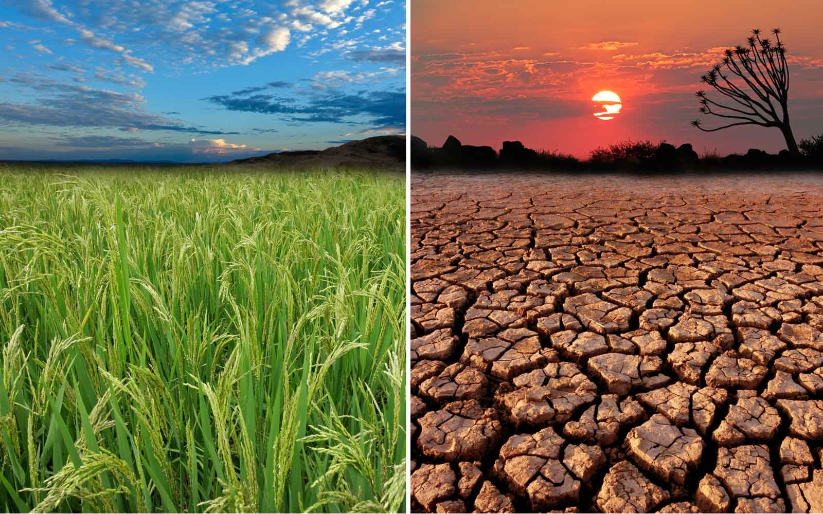 Global Food Shortages? Learn More this World Day to Combat Desertification (June 17)