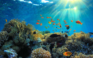 Celebrate World Oceans Day This June 8