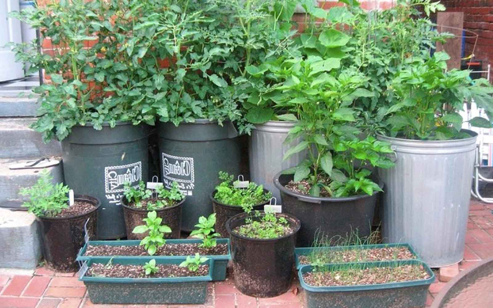 GrowFood - Container gardening
