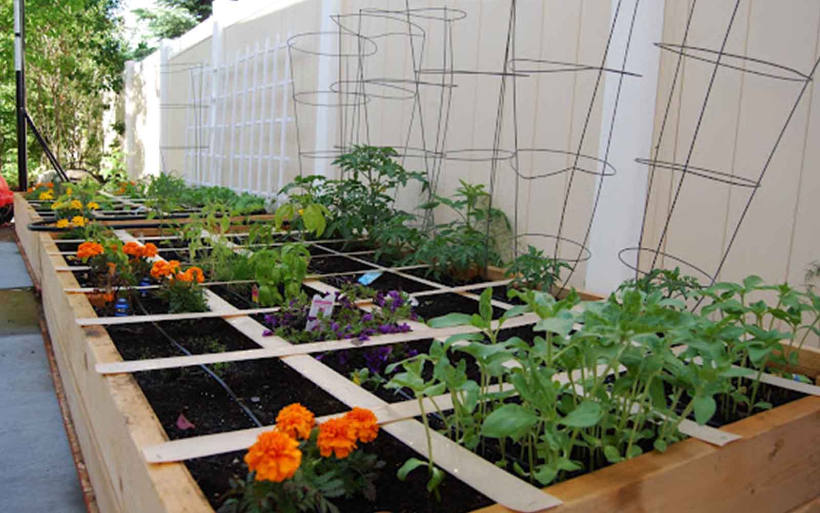 GrowFood - Square foot gardening