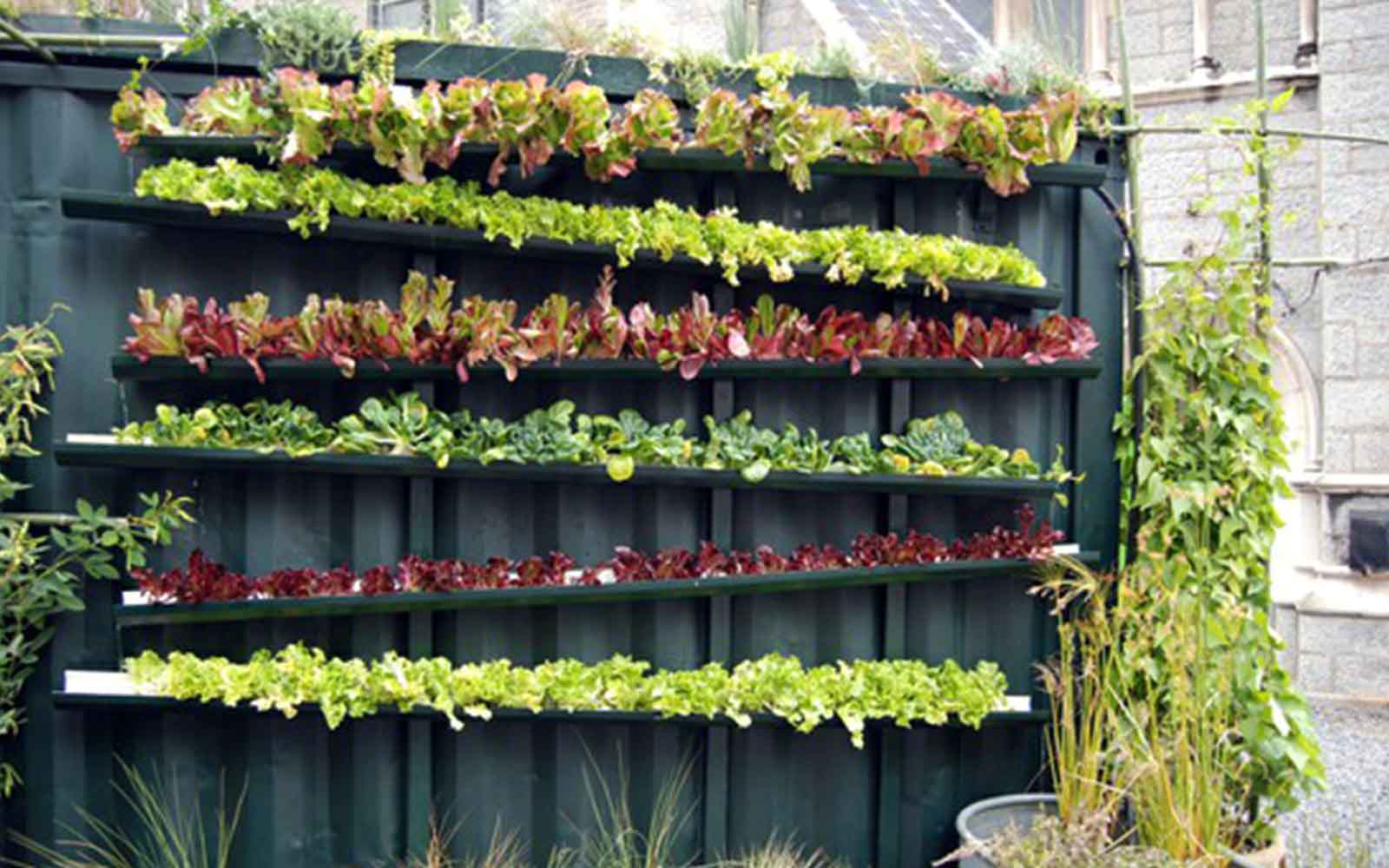 GrowFood - Vertical gardening