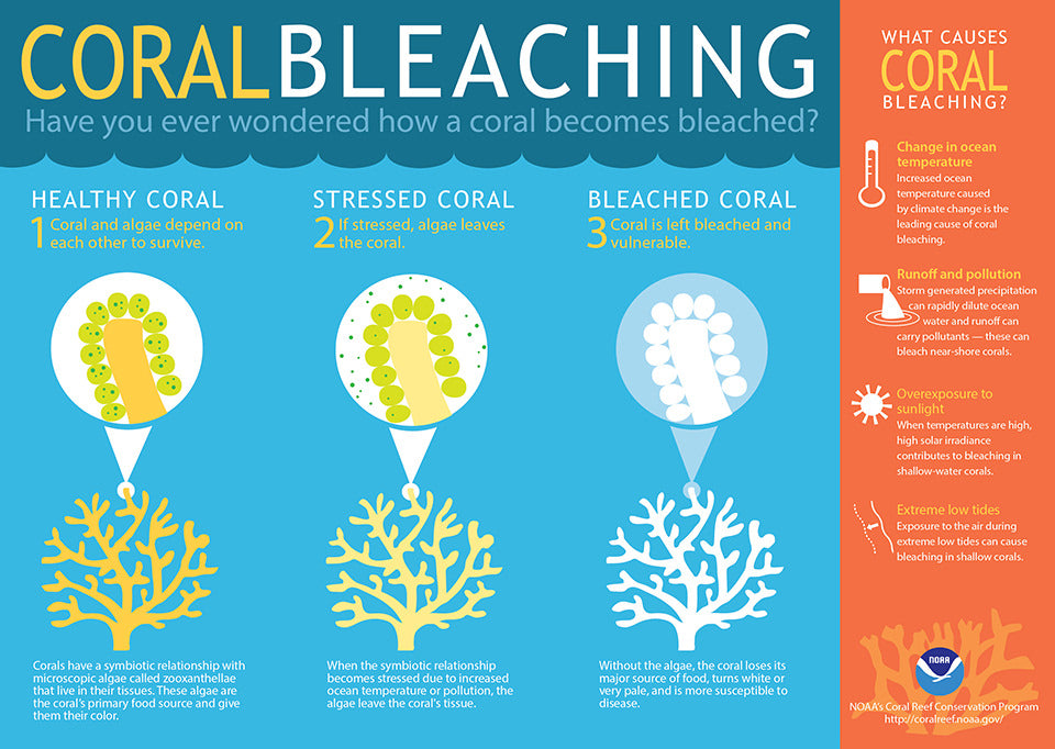 Coral bleaching facts