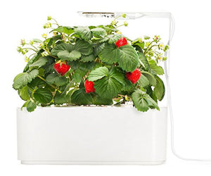Click & Grow Smartpot Strawberry Indoor Grow Kit with LED Grow Light - EarthCitizen  - 2