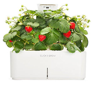 Click & Grow Smartpot Strawberry Indoor Grow Kit with LED Grow Light - EarthCitizen  - 1