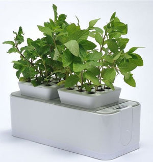 ZeroSoil Mini Indoor Garden - Self Watering Planter and Indoor Herb Garden - EarthCitizen  - 1