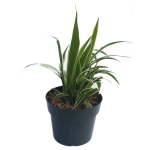 50 Plant Pots - 4 Inch - EarthCitizen  - 2