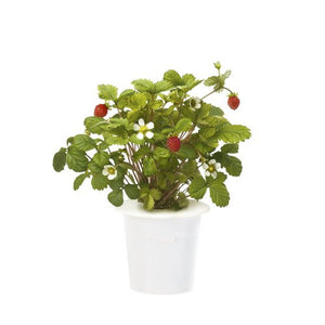 Click & Grow Wild Strawberry Refill 3-Pack for Smart Herb Garden - EarthCitizen  - 1