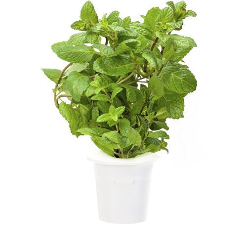 Click & Grow Peppermint Refill 3-Pack for Smart Herb Garden - EarthCitizen  - 1