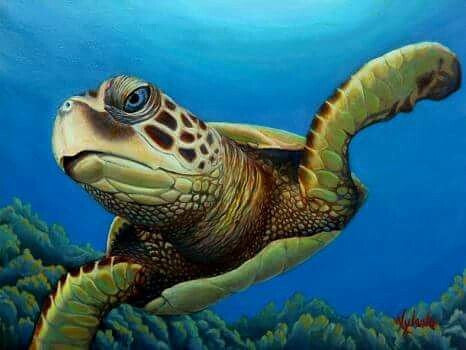 """Got Squid?""  Green Sea turtle Honu Painting"