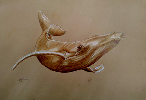 Humpback Whale KC series Coffee Painting Matted Giclee Reproduction, Limited Edition