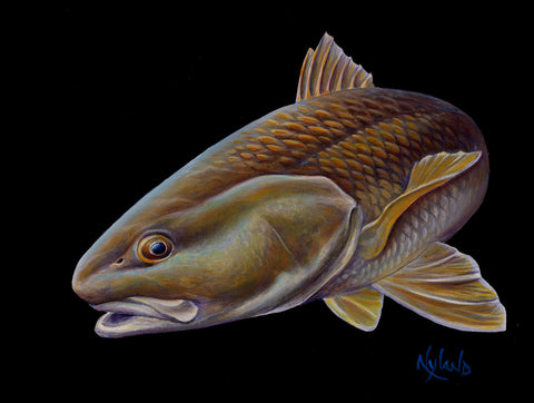 VE Redfish III Red Drum Print Fish Art