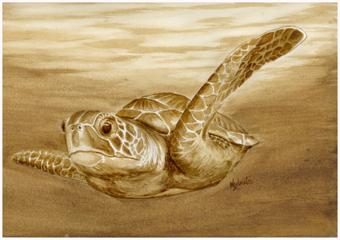 Honu,  KC series Coffee Painting Matted Giclee Reproduction, Limited Edition