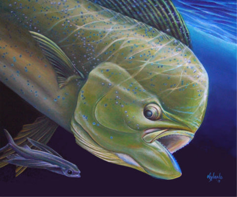 Mahi Dolphin and Flying Fish Print Art