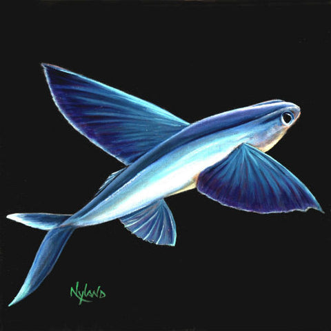 Flying Fish Fishing Print V.E. Series