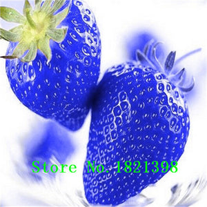 500 Seeds / Pack, Super Giant Strawberry Fruit Seed Apple Sized 100% True Variety NOT fake free shipping - Raja Indonesia