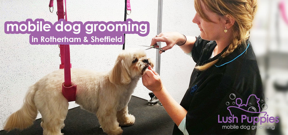 Mobile dog grooming in Rotherham