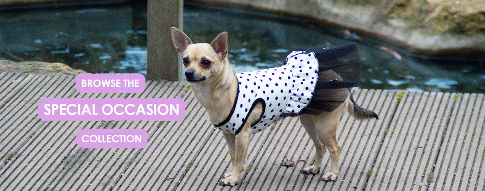 Special Occasin Dog Clothing