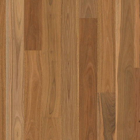 Engineered Spotted Gum Matt Brushed Finish