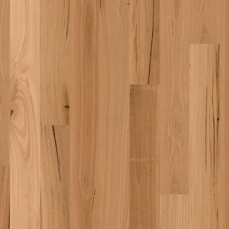 Engineered Blackbutt Matt brushed 1 strip
