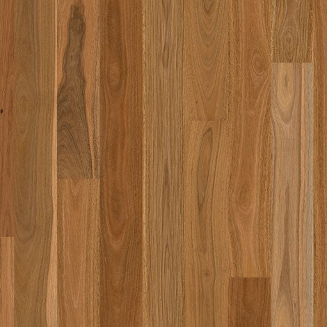 Engineered Spotted Gum Matt Brushed 1 strip