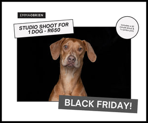 Black Friday 2020 - 1 Dog Studio Shoot