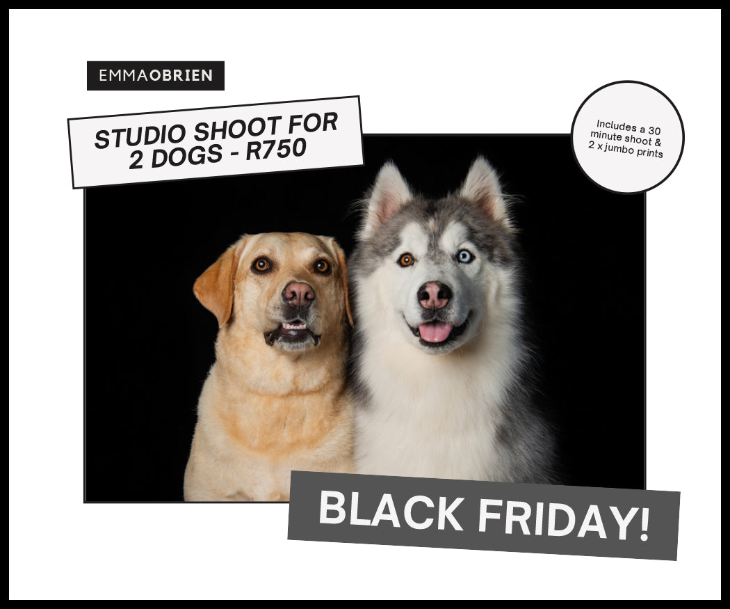 Black Friday 2020 - 2 Dog Studio Special