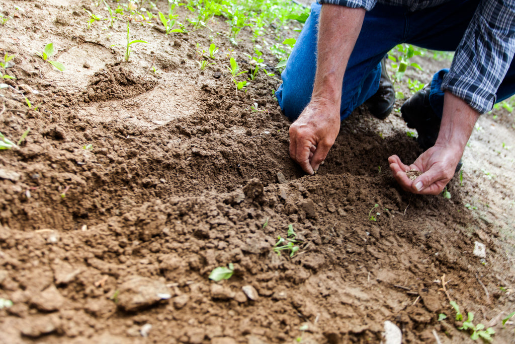 Sow Good Seeds – Think Before Sowing Bad Seeds