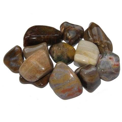 Petrified Wood Tumbled Stone - Patience, Strength and Support